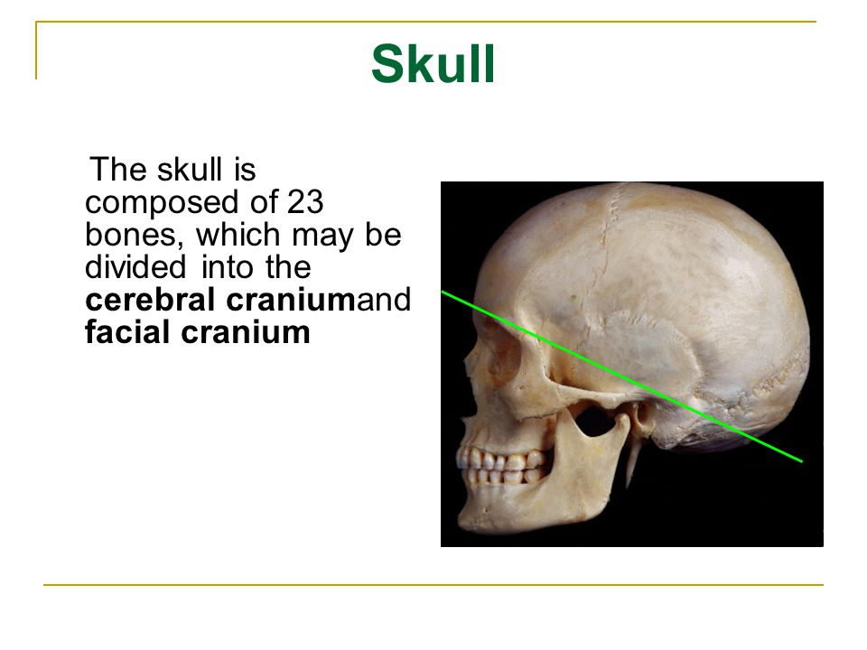 Skull The skull is composed of 23 bones, which may be divided into the cerebral craniumand facial cranium.