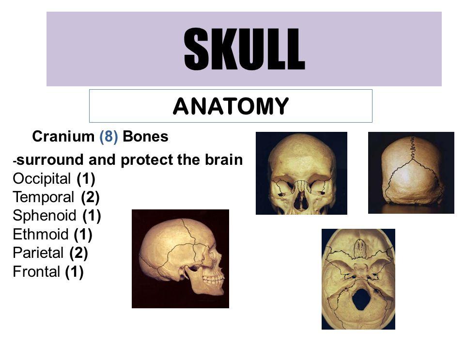 SKULL ANATOMY Cranium (8) Bones Occipital (1) Temporal (2)