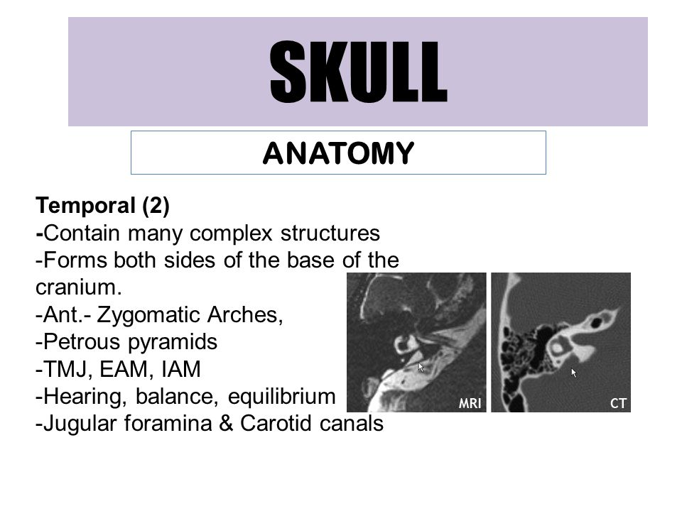 SKULL ANATOMY Temporal (2) -Contain many complex structures