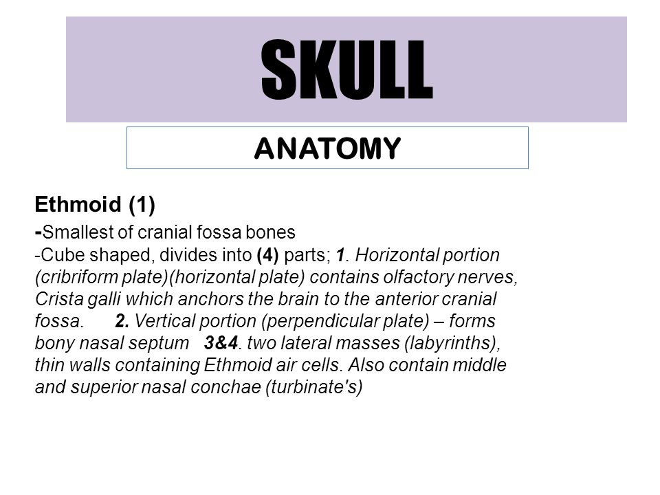 SKULL ANATOMY Ethmoid (1) -Smallest of cranial fossa bones