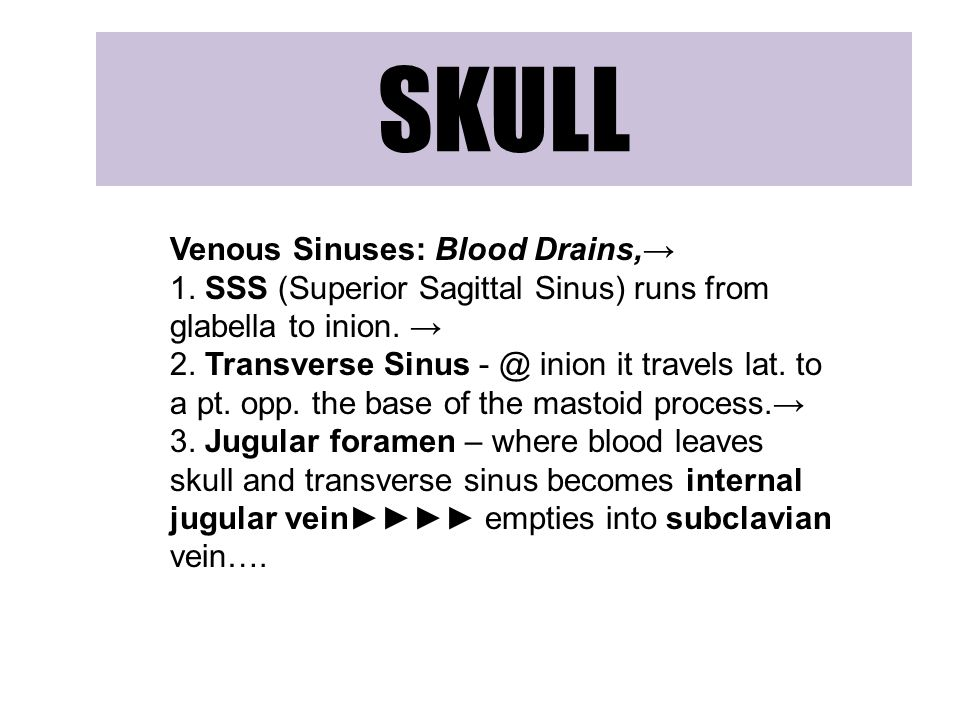 SKULL Venous Sinuses: Blood Drains,→