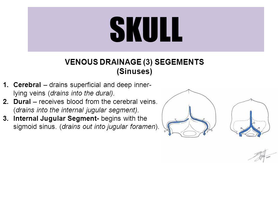 VENOUS DRAINAGE (3) SEGEMENTS (Sinuses)