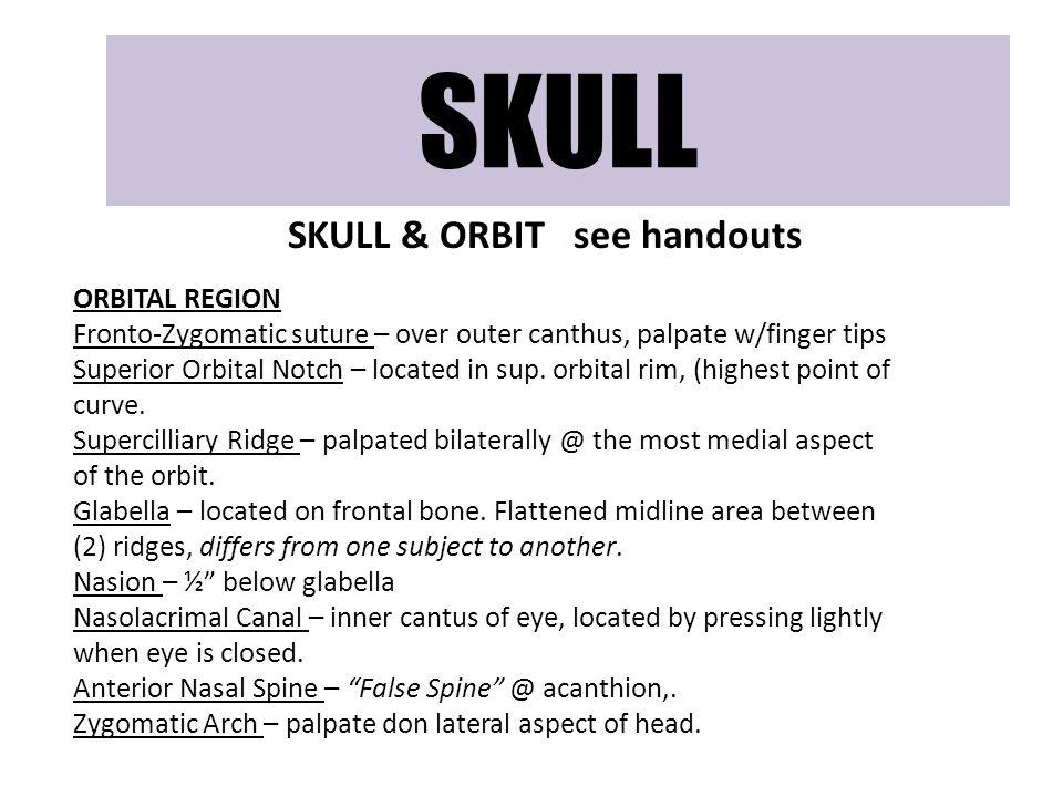 SKULL & ORBIT see handouts