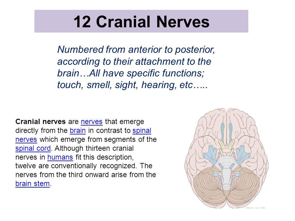 12 Cranial Nerves MR FACE CORONAL