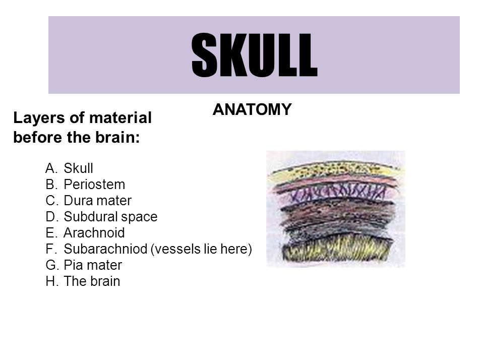 SKULL ANATOMY Layers of material before the brain: Skull Periostem
