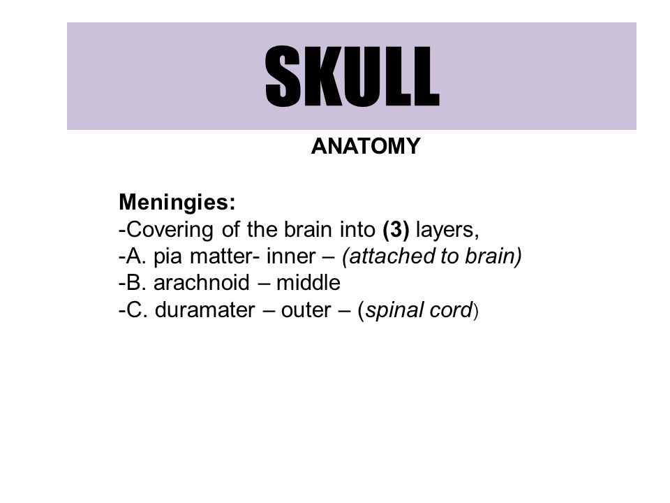 SKULL ANATOMY Meningies: Covering of the brain into (3) layers,