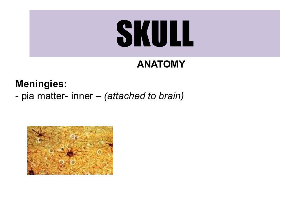 SKULL ANATOMY Meningies: pia matter- inner – (attached to brain)