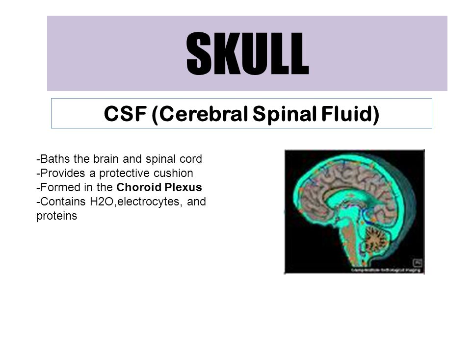 CSF (Cerebral Spinal Fluid)