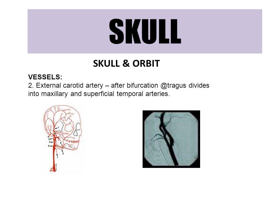SKULL SKULL & ORBIT VESSELS: