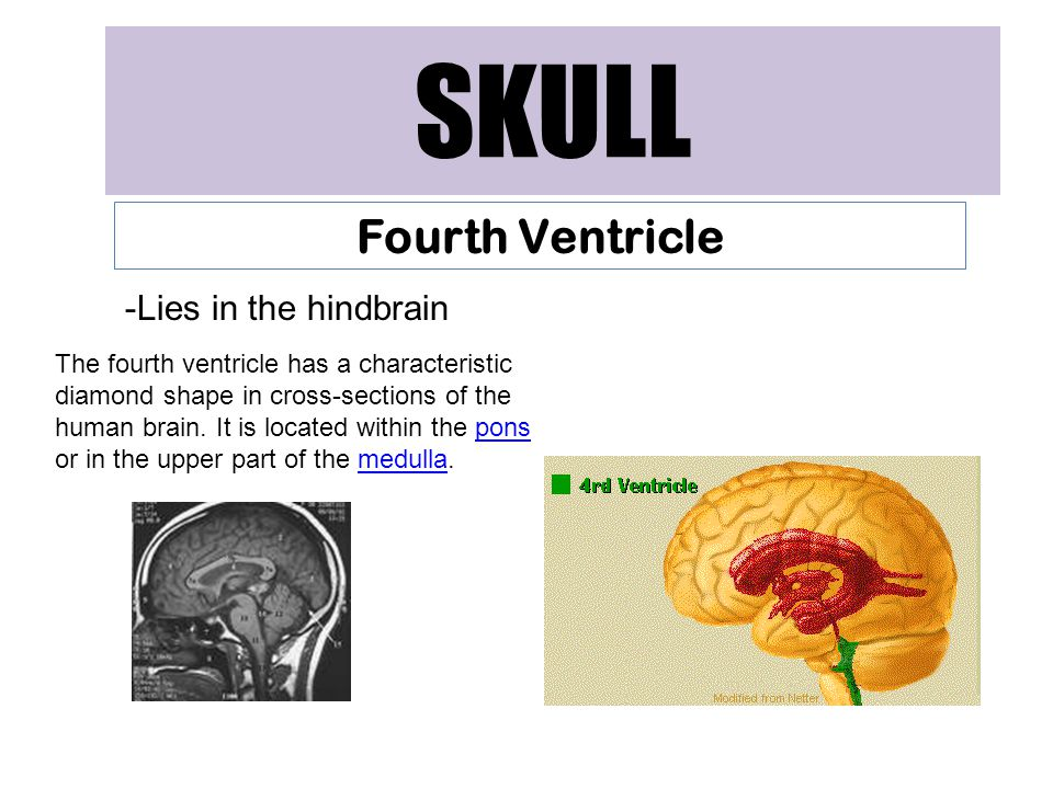 SKULL Fourth Ventricle Lies in the hindbrain