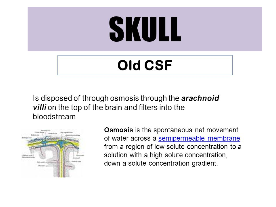 SKULL Old CSF. Is disposed of through osmosis through the arachnoid villi on the top of the brain and filters into the bloodstream.