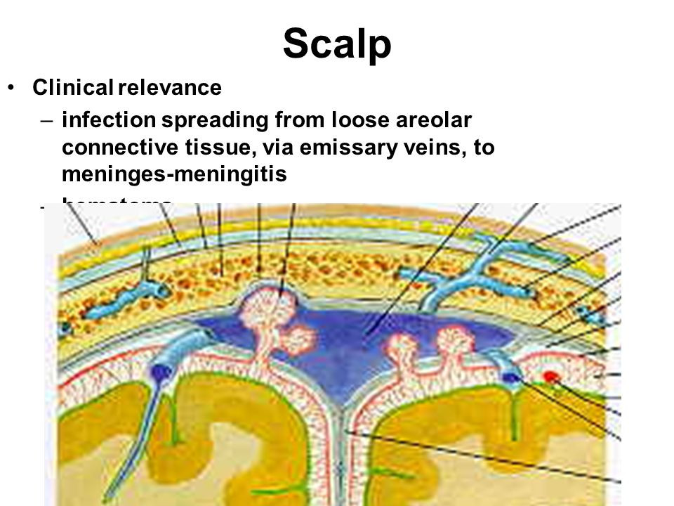 Scalp Clinical relevance