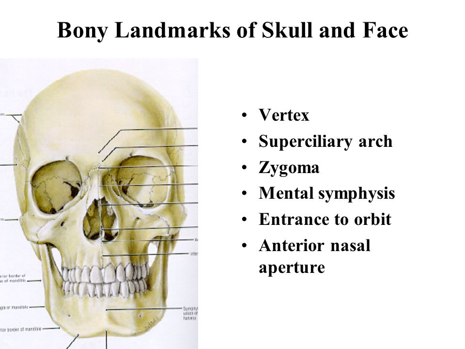 Skull and Face Boonsirm Withyachumnarnkul, M.D., Ph.D ...
