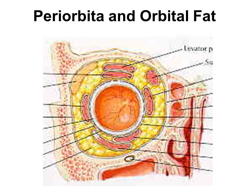 Periorbita and Orbital Fat