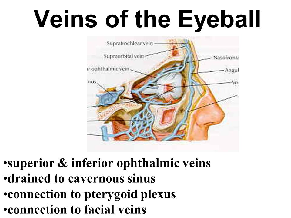 Veins of the Eyeball superior & inferior ophthalmic veins