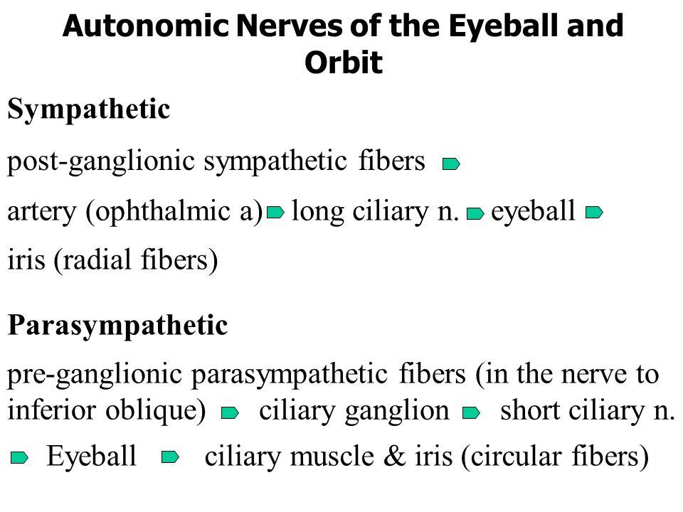 Autonomic Nerves of the Eyeball and Orbit