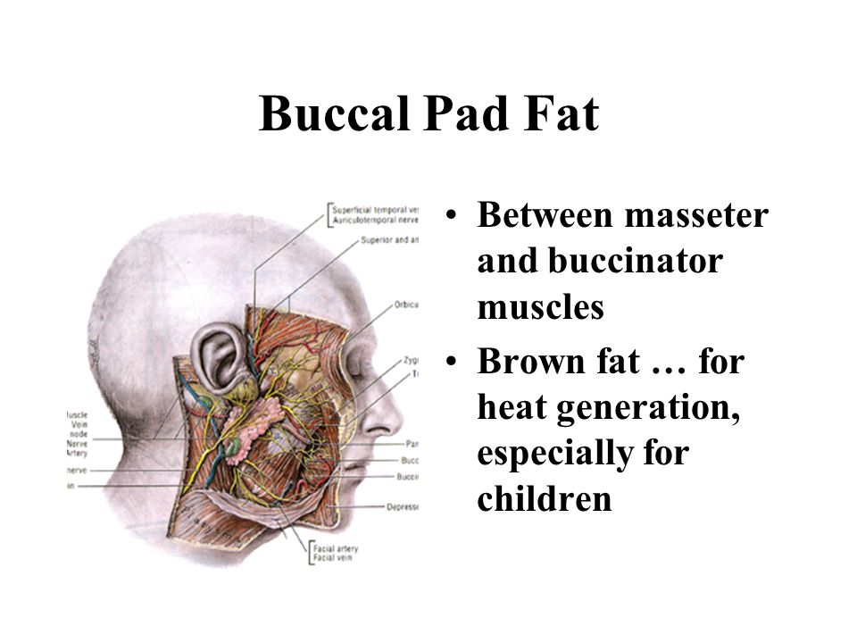 Buccal Pad Fat Between masseter and buccinator muscles
