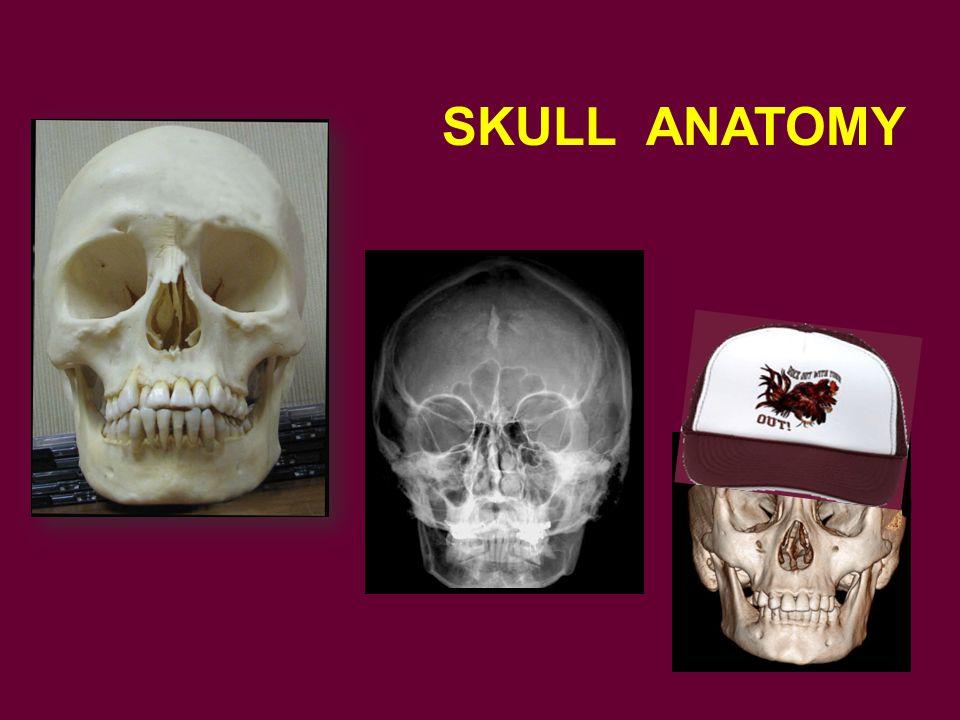 SKULL ANATOMY To start with skull anatomy.