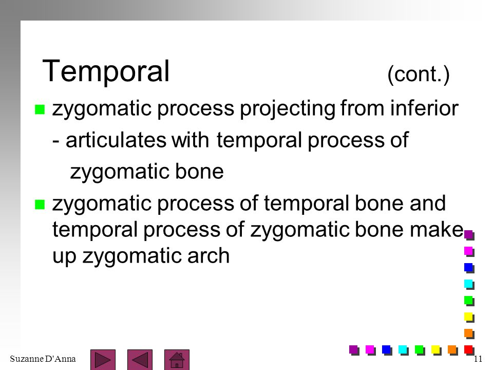 Temporal (cont.) zygomatic process projecting from inferior
