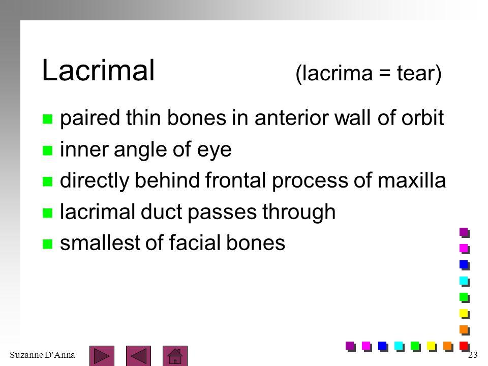 Lacrimal (lacrima = tear)