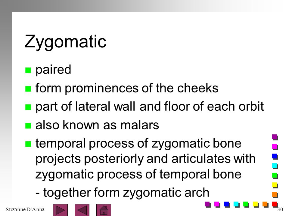 Zygomatic paired form prominences of the cheeks