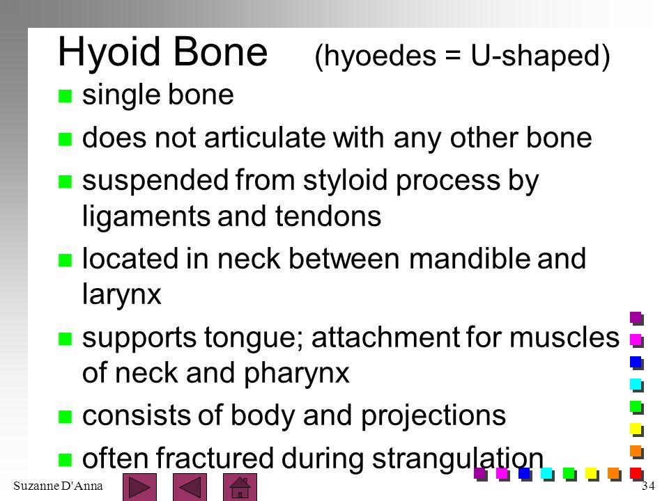 Hyoid Bone (hyoedes = U-shaped)