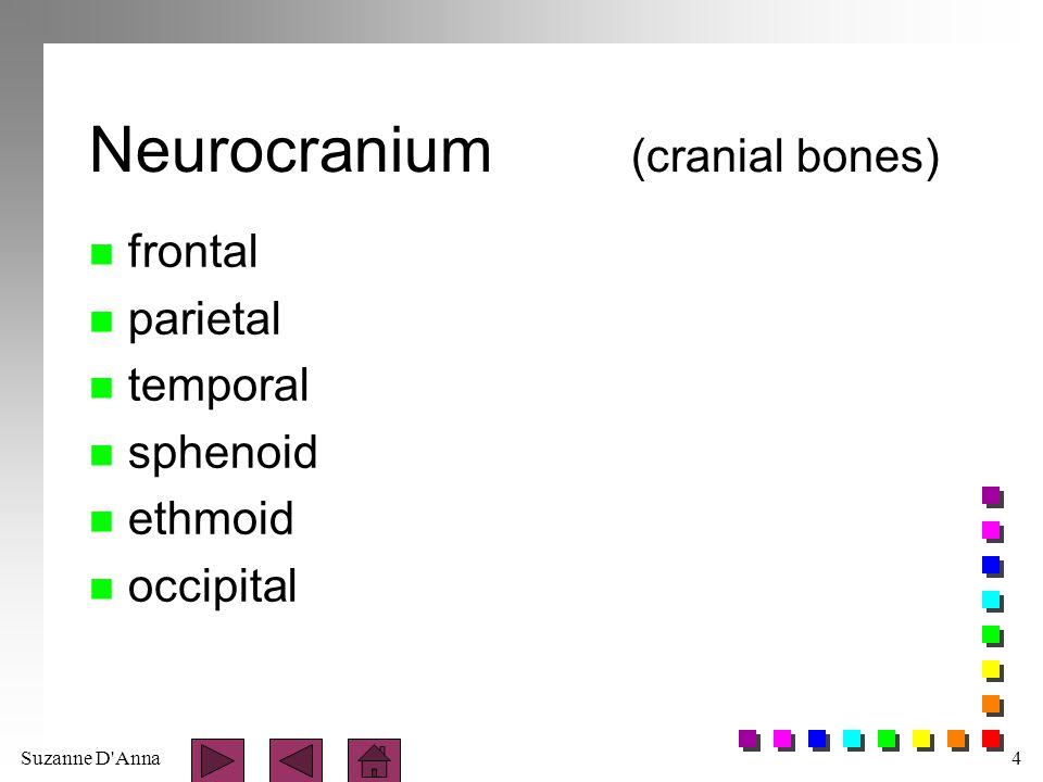 Neurocranium (cranial bones)