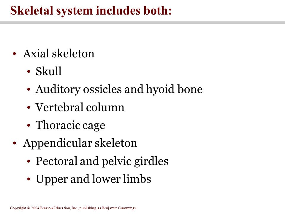 Skeletal system includes both: