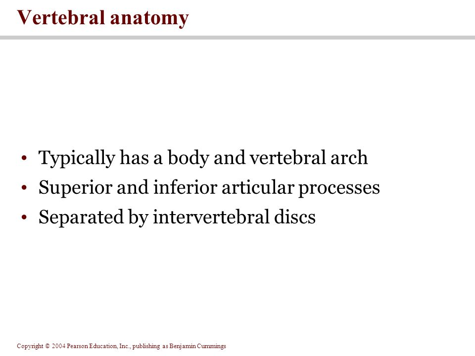 Vertebral anatomy Typically has a body and vertebral arch