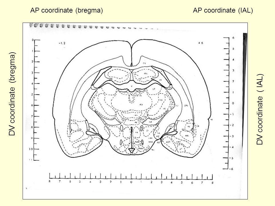 DV coordinate (bregma)