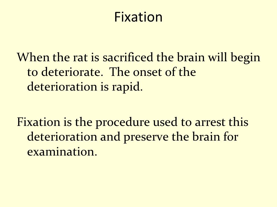 Fixation When the rat is sacrificed the brain will begin to deteriorate. The onset of the deterioration is rapid.