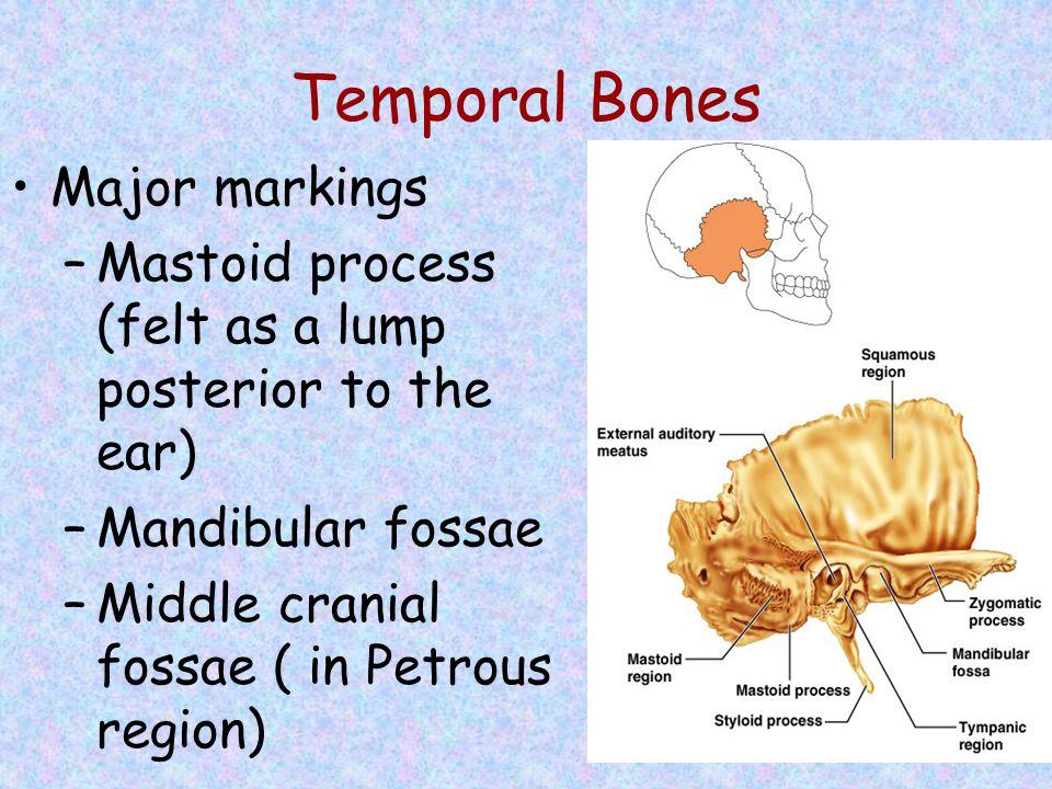 Temporal Bones Major markings
