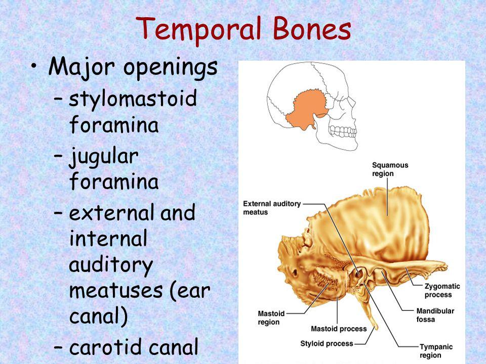 Temporal Bones Major openings stylomastoid foramina jugular foramina