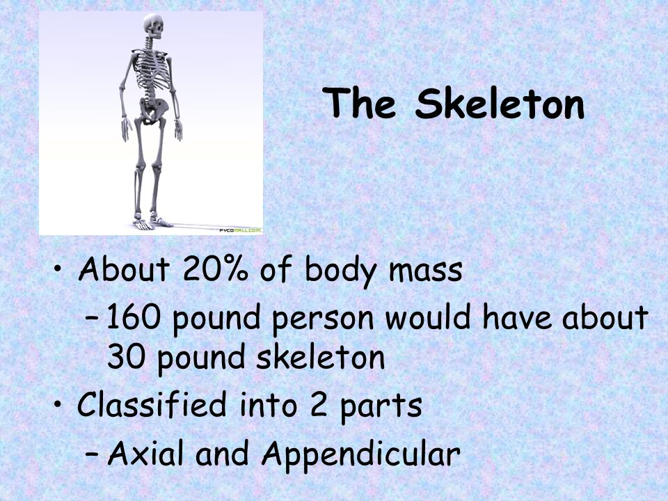 The Skeleton About 20% of body mass