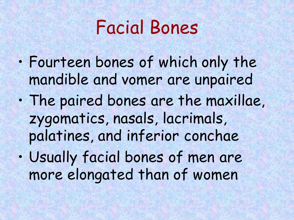 Facial Bones Fourteen bones of which only the mandible and vomer are unpaired.