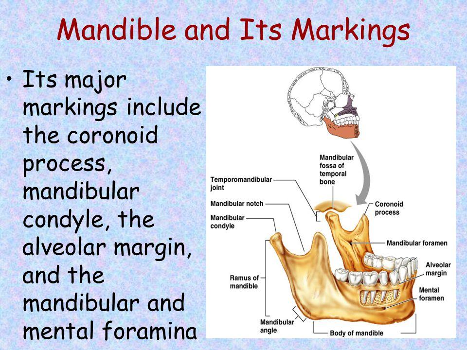 Mandible and Its Markings