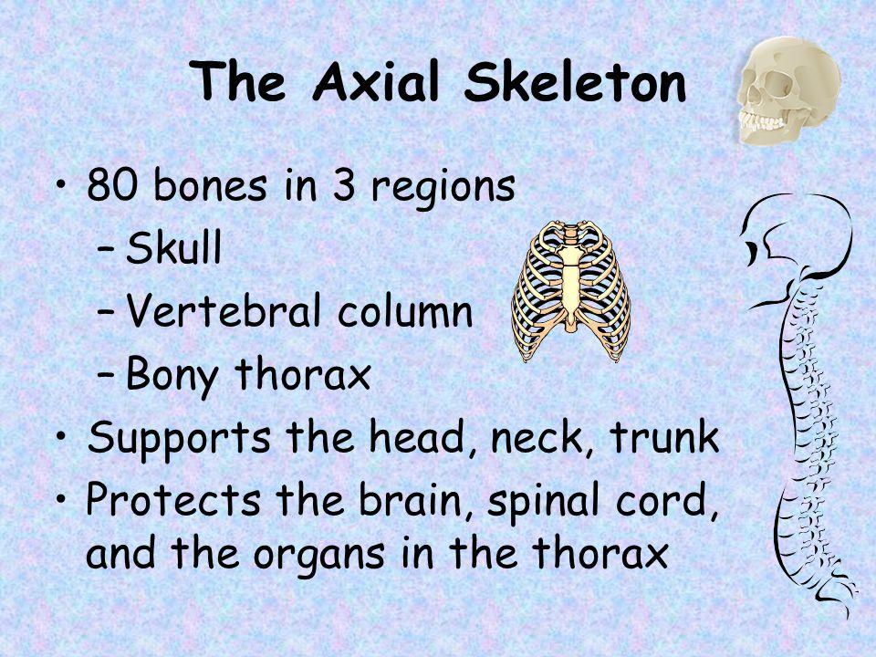 The Axial Skeleton 80 bones in 3 regions Skull Vertebral column