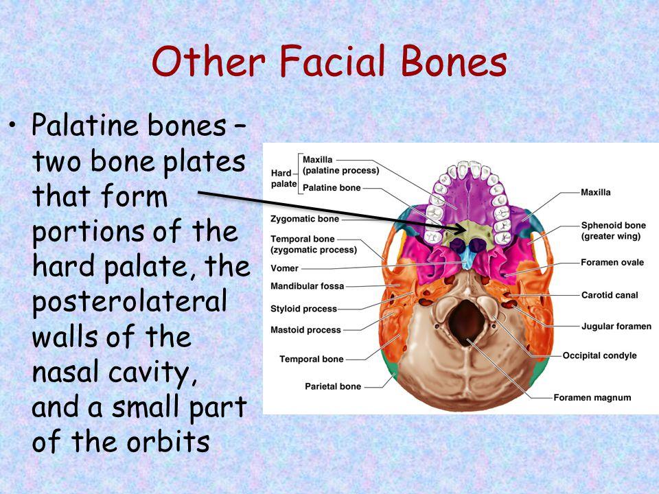 Other Facial Bones