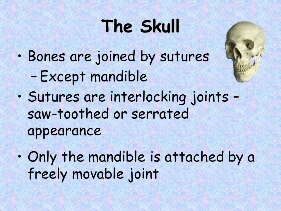 The Skull Bones are joined by sutures Except mandible