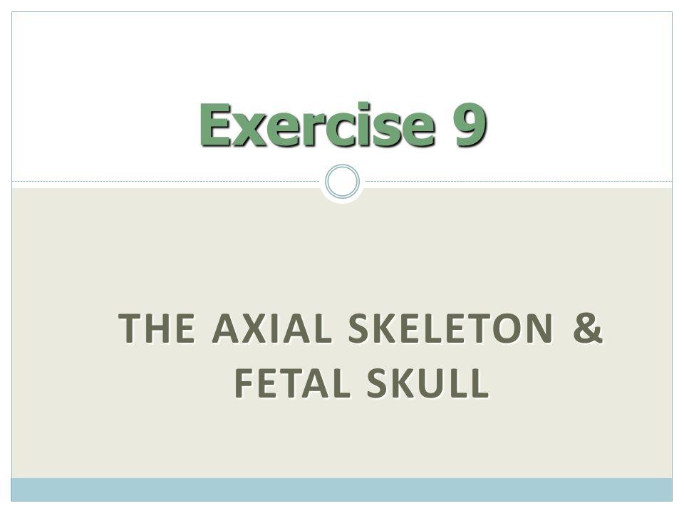 The Axial Skeleton & Fetal Skull