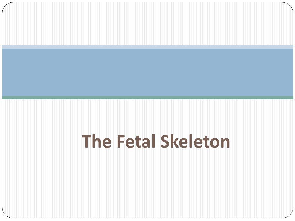 The Fetal Skeleton