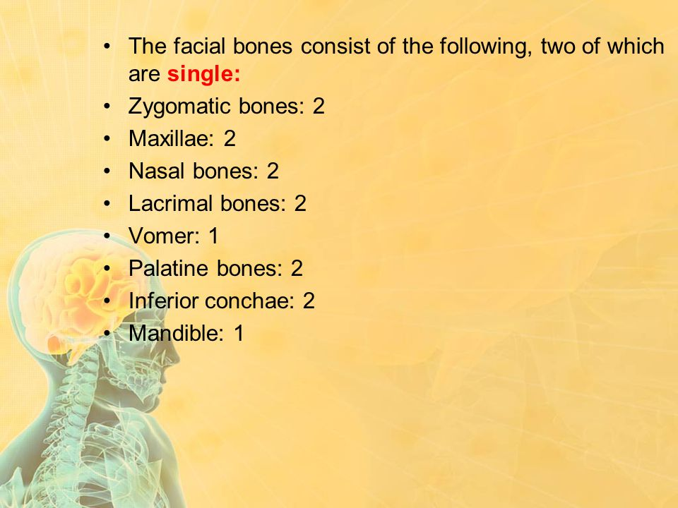 The facial bones consist of the following, two of which are single: