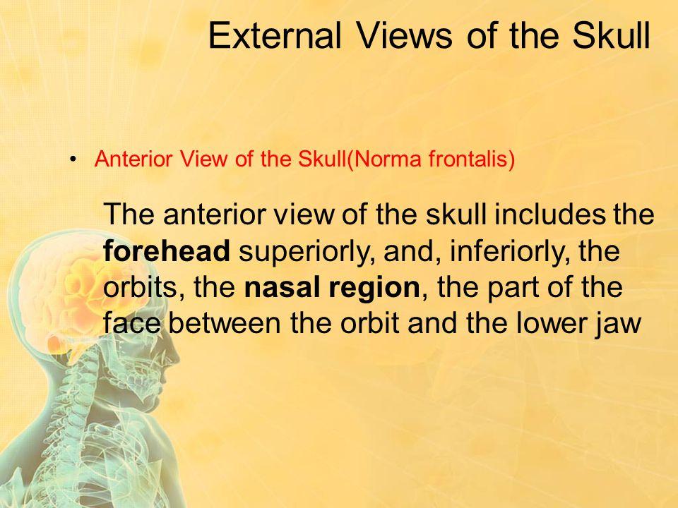 External Views of the Skull