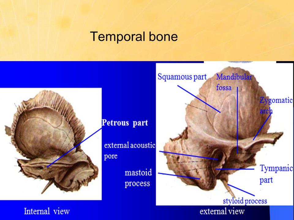 Anatomy temporal bone