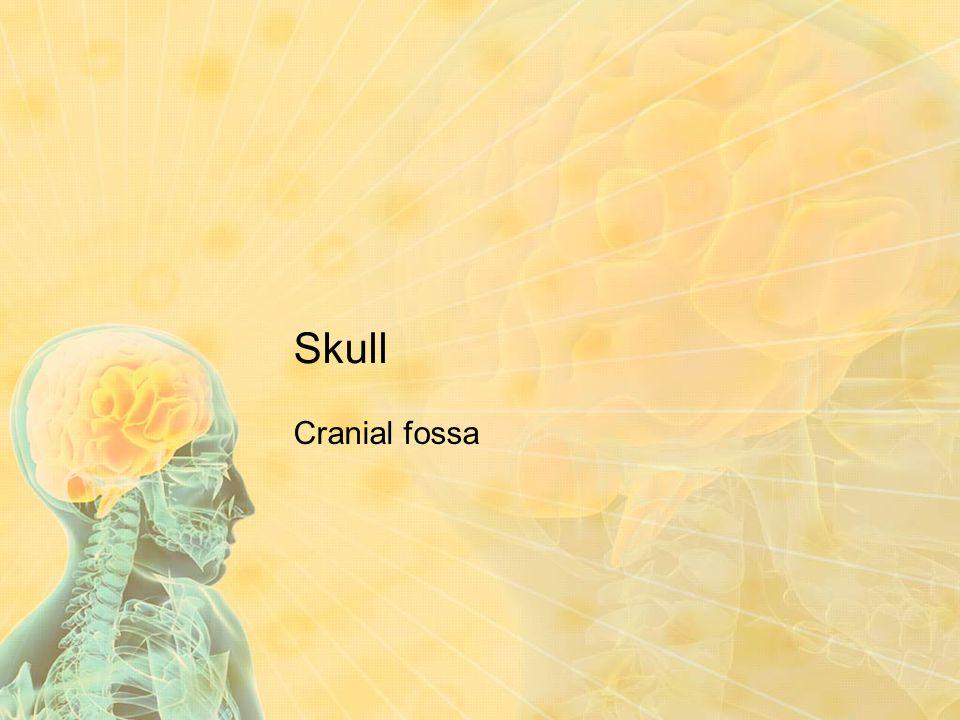 Skull Cranial fossa