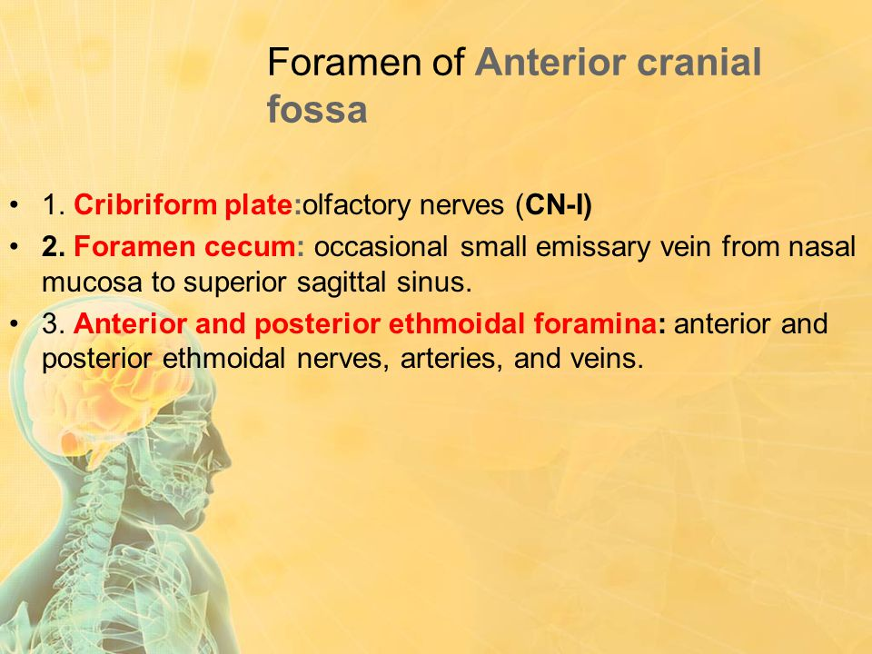 Foramen of Anterior cranial fossa