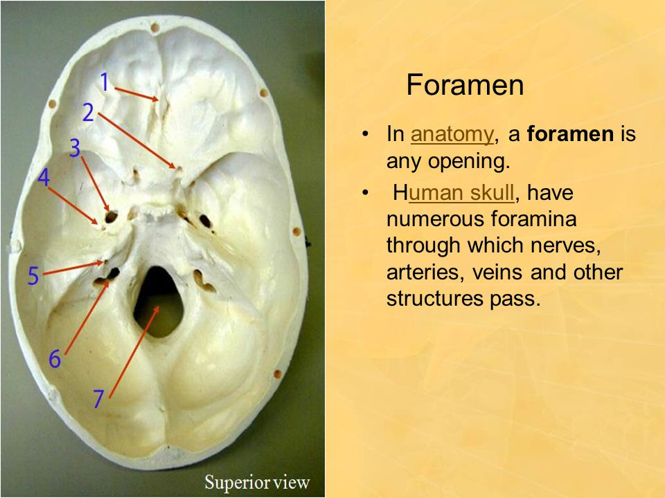 Foramen In anatomy, a foramen is any opening.
