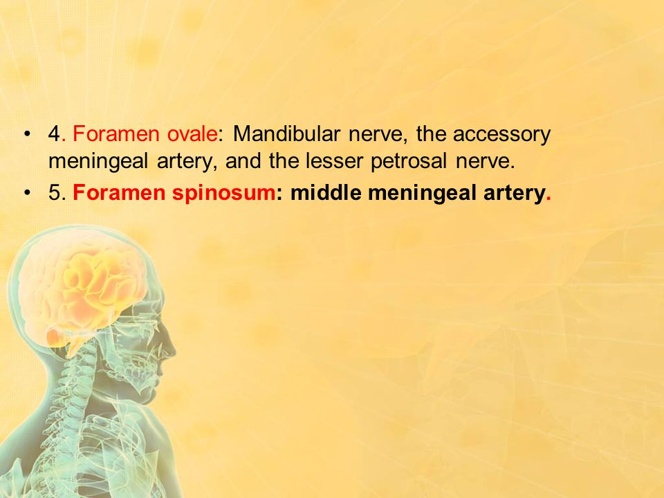 4. Foramen ovale: Mandibular nerve, the accessory meningeal artery, and the lesser petrosal nerve.