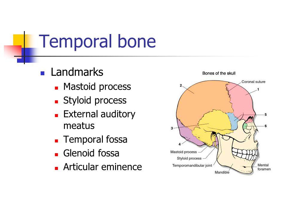 Temporal bone Landmarks Mastoid process Styloid process