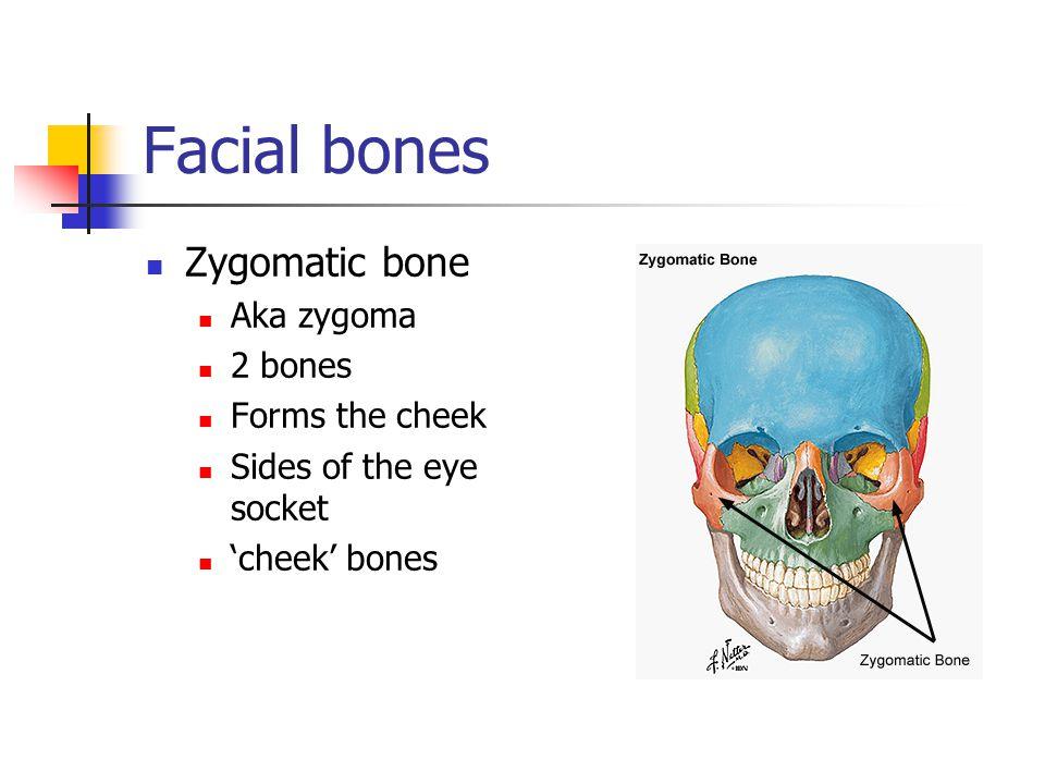 Facial bones Zygomatic bone Aka zygoma 2 bones Forms the cheek
